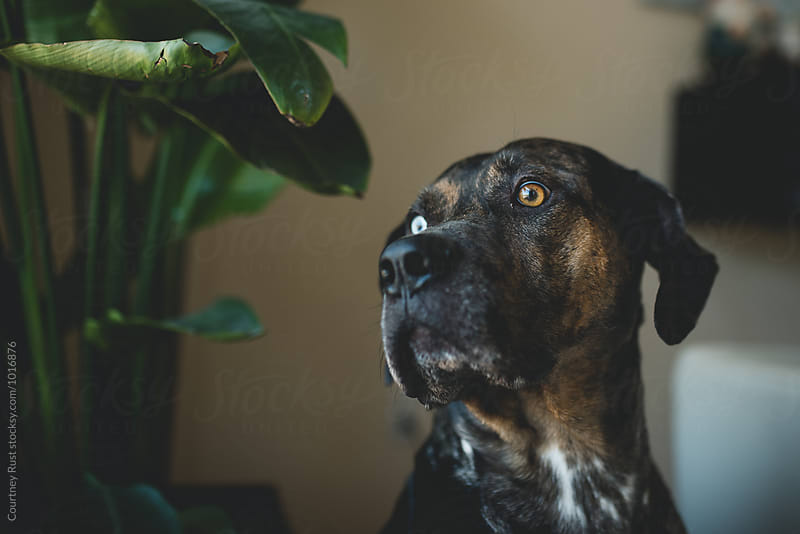Portrait of a Pooch by Courtney Rust for Stocksy United