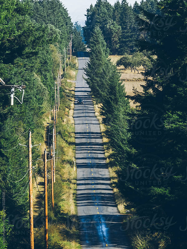 Treelined country road by unite images for Stocksy United