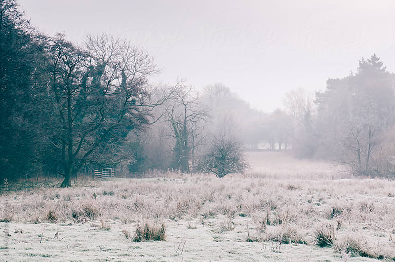 Rural field covered in frost. Norfolk, UK. by Liam Grant for Stocksy United