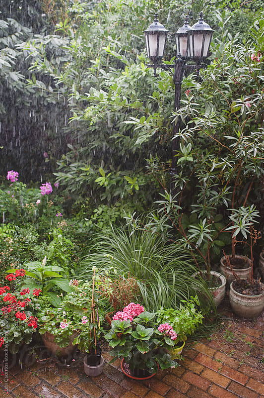 Heavy rain in a garden full of bushes and flowers by Lea Csontos for Stocksy United