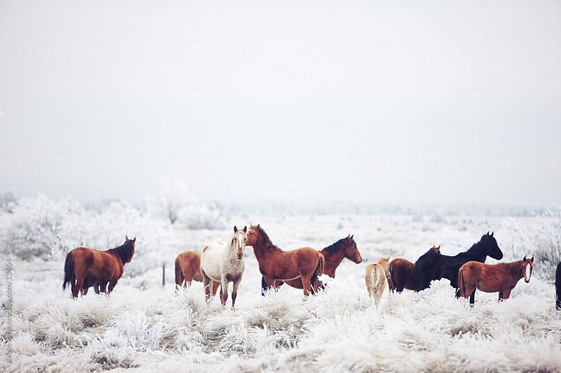 Winter Horseland by Kevin Russ for Stocksy United