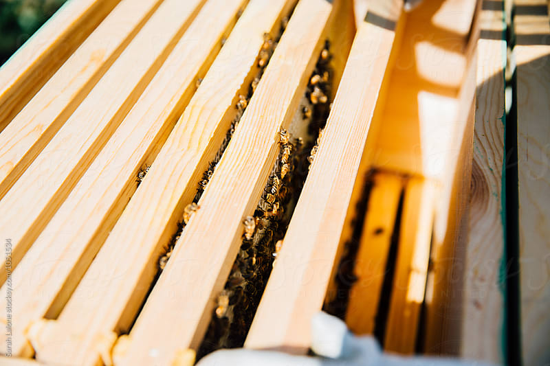 Frames of a bee hive by Sarah Lalone for Stocksy United