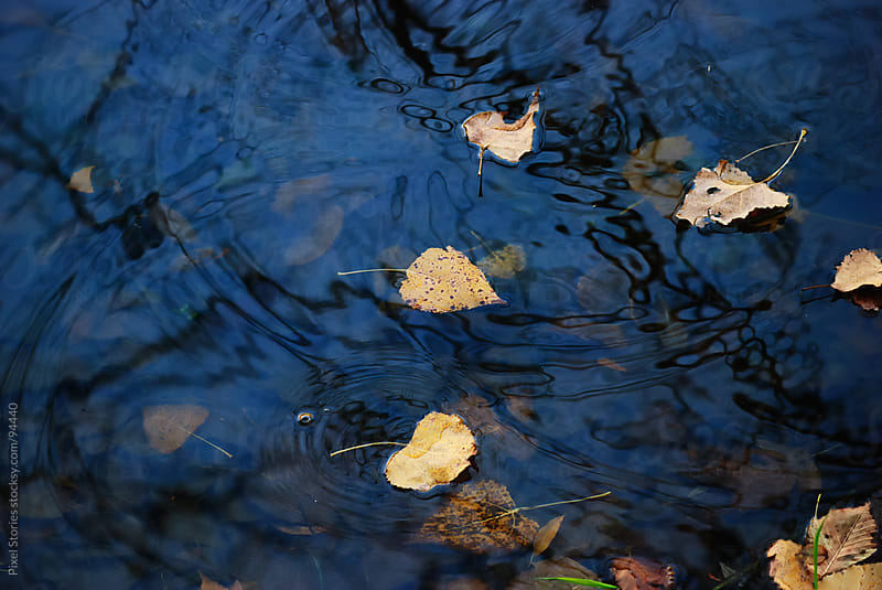 Fall leaves in water by Pixel Stories for Stocksy United