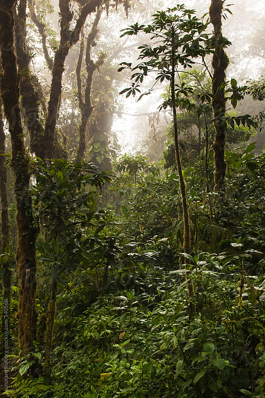 A lush and green rain forest by Jonatan Hedberg for Stocksy United