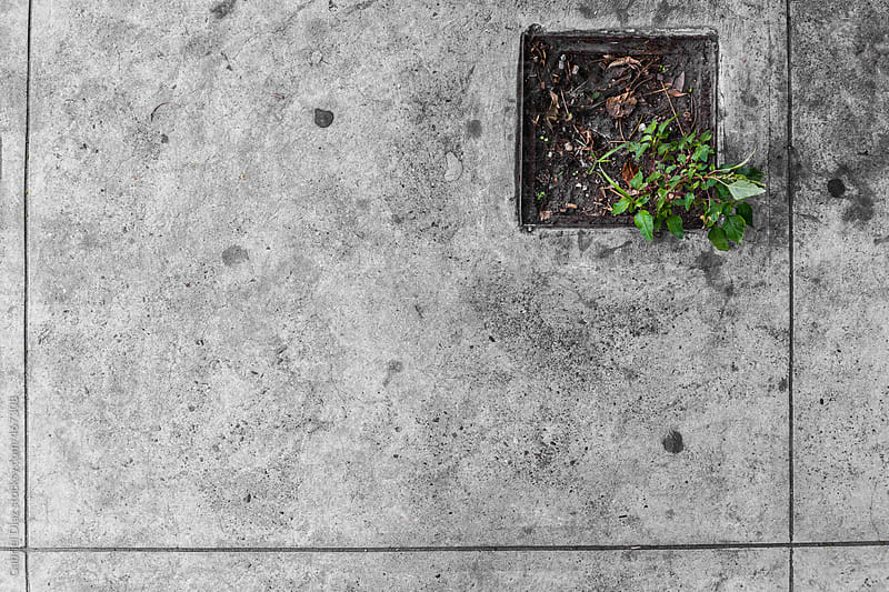 Life Finds A Way. by Gabriel Diaz for Stocksy United