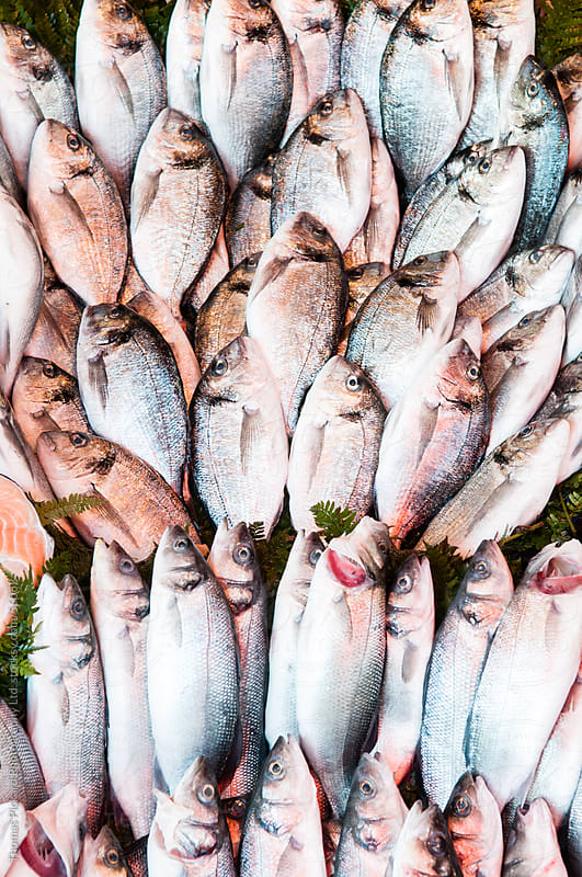 Fresh fish for sale, Istanbul Turkey. by Thomas Pickard Photography Ltd. for Stocksy United