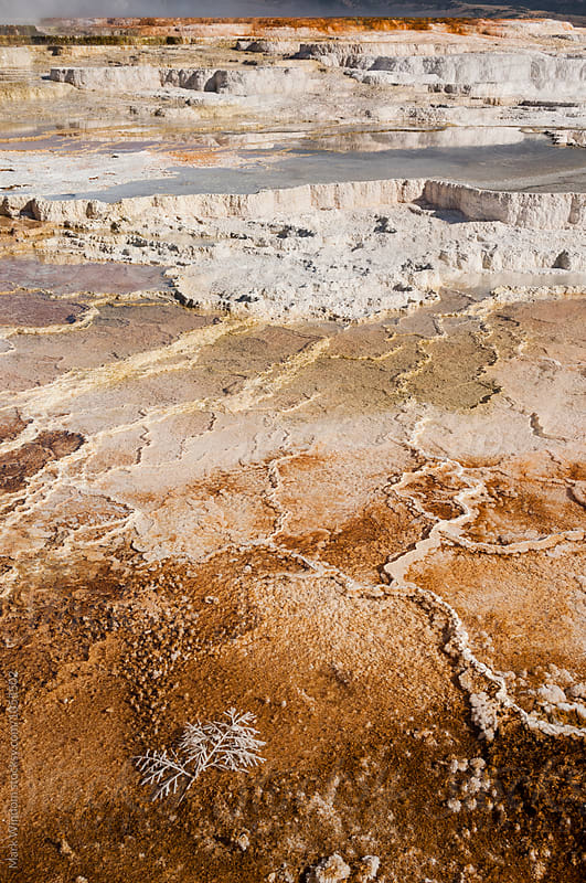 Mammoth Hot Springs by Mark Windom for Stocksy United
