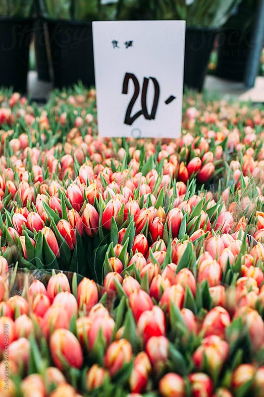 Tulips on flower market by Zocky for Stocksy United