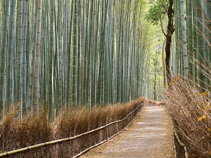 Arashiyama Bamboo Grove Forest by Fotografie Daniel Osterkamp for Stocksy United
