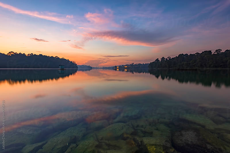 Singapore MacRitchie Reservoir Dawn Hour by Jacobs Chong for Stocksy United