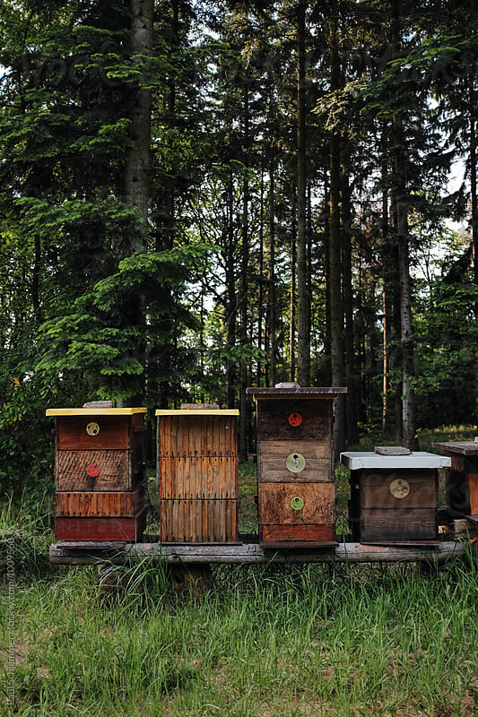 beehives by Paul Schlemmer for Stocksy United