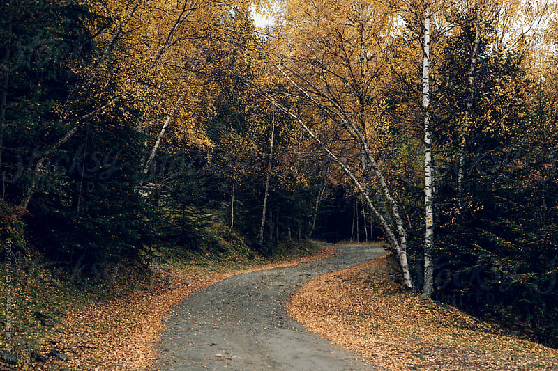 Road trough forest in autumn with yellow leaves by Jordi Rulló for Stocksy United