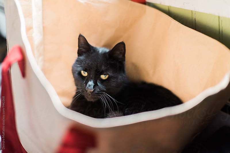 black cat in a tote bag by Deirdre Malfatto for Stocksy United