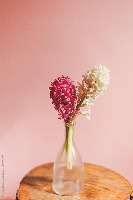 Flowers in a bottle  by Marija Kovac for Stocksy United