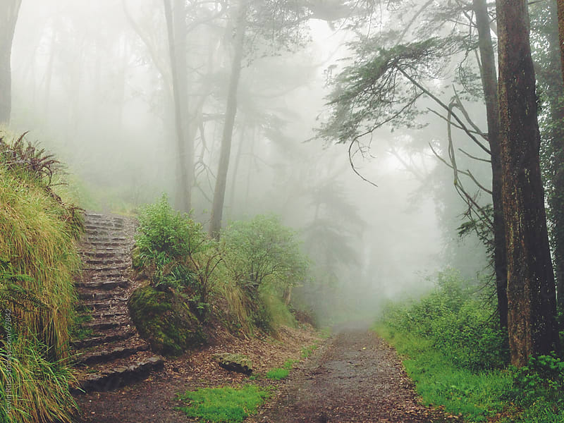 Foggy Forest Stairs and Road by Kevin Russ for Stocksy United