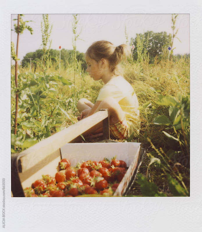 Polaroid Photograph Of A Girl Picking Ripe Strawberries On A Summer Afternoon by ALICIA BOCK for Stocksy United