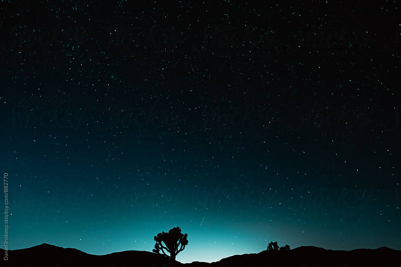Joshua Tree National Park at Night by Daniel Inskeep for Stocksy United