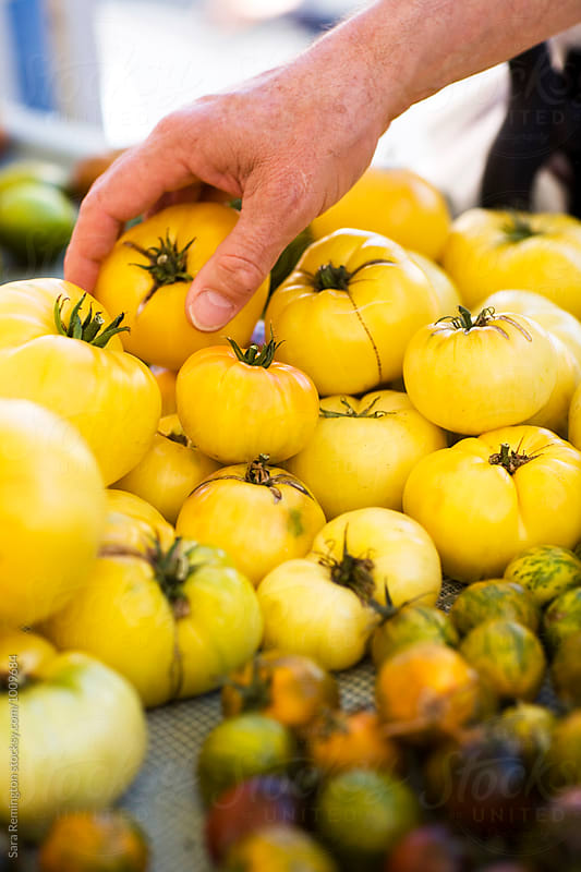 Yellow Tomatoes by Sara Remington for Stocksy United
