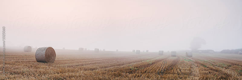 Round bales in a stubble field bound with fog at dawn. Norfolk, UK. by Liam Grant for Stocksy United