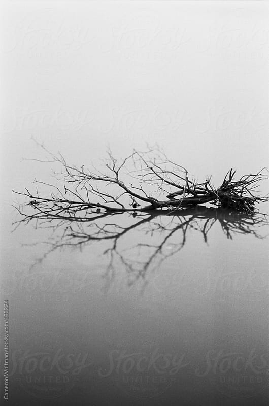 Dead tree in calm water by Cameron Whitman for Stocksy United