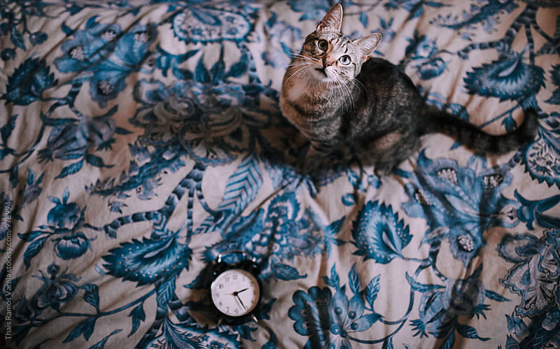 clock and cat by Thais Ramos Varela for Stocksy United