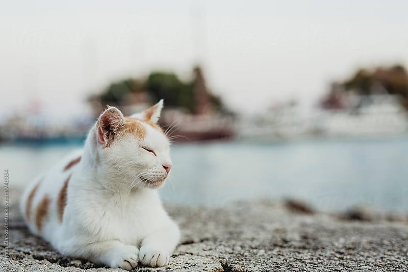 Cat by Tatjana Zlatkovic for Stocksy United