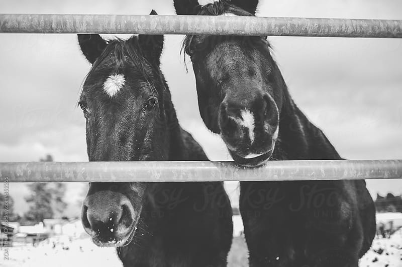 Horses on a farm in Flagstaff by ZOA PHOTO for Stocksy United