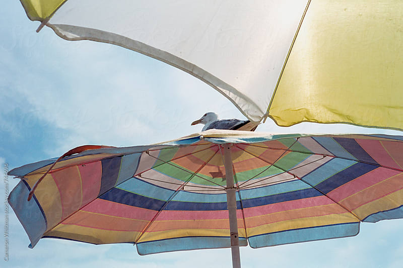 A winged visitor perches atop my beach umbrella by Cameron Whitman for Stocksy United