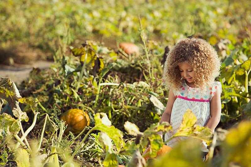Pumpkins: Little Girl Looking Down At Pumpkin by Sean Locke for Stocksy United
