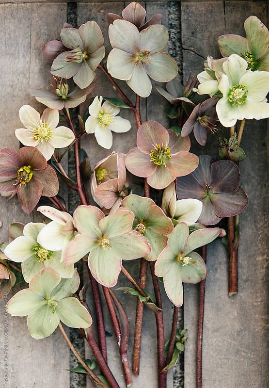 Flowers  by Melanie DeFazio for Stocksy United