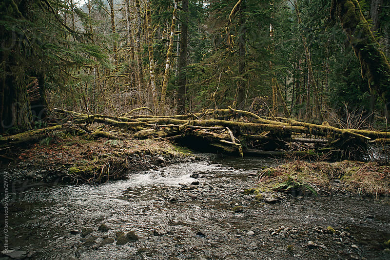 In the Woods by Bethany Olson for Stocksy United