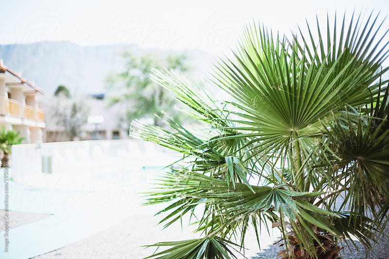 crop of palm tree by Image Supply Co for Stocksy United
