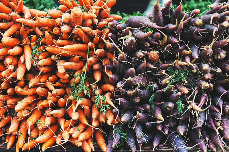 Bunch of carrots on an organic market. by BONNINSTUDIO for Stocksy United