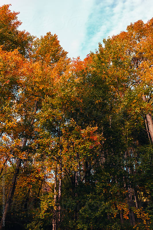 Colorful autumn trees by Leandro Crespi for Stocksy United