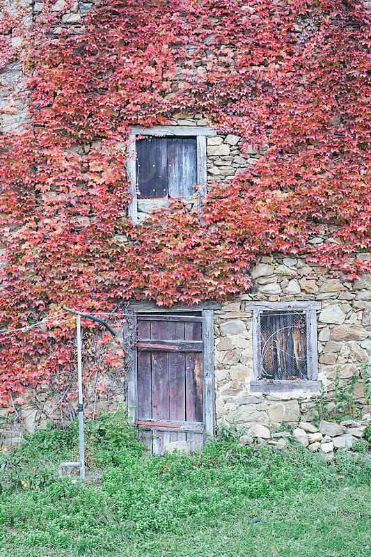 A old house in autumn covered by red leaves by Koen Meershoek for Stocksy United