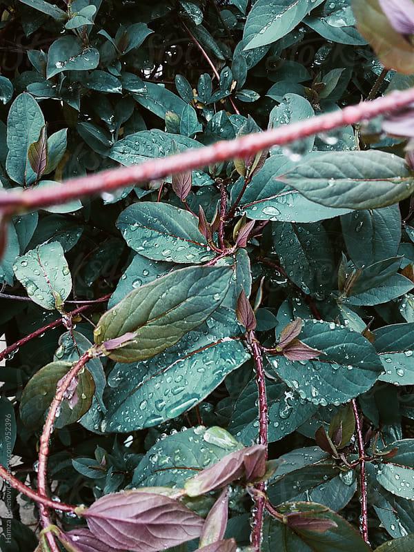 Blue plant photo and raindrops by Hamza Kulenović for Stocksy United