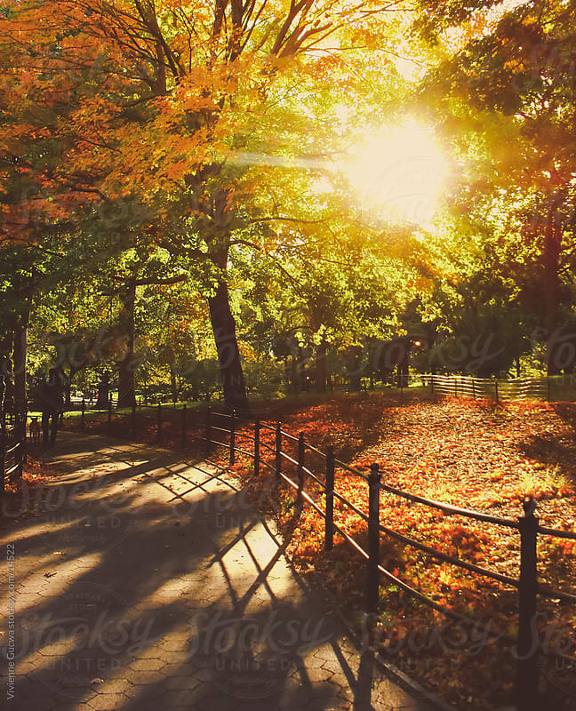 Sun Through Autumn Trees by Vivienne Gucwa for Stocksy United