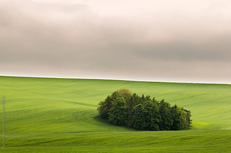 Cropland in South Moravia by Marilar Irastorza for Stocksy United