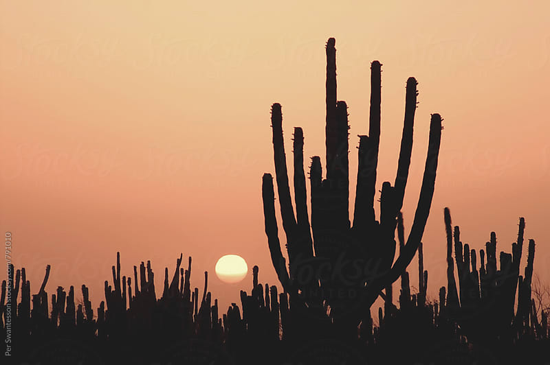 Sunset over Mexican cactus forest in the desert by Per Swantesson for Stocksy United