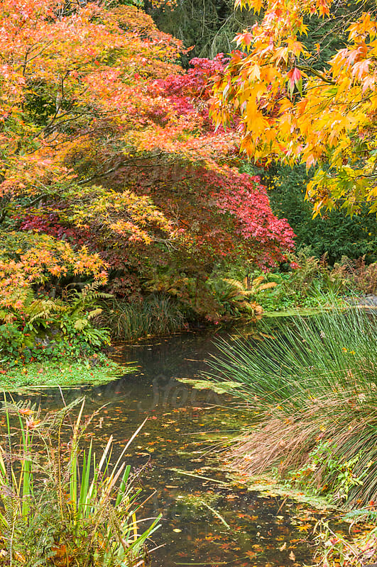 Autumn Pond by Mark Windom for Stocksy United
