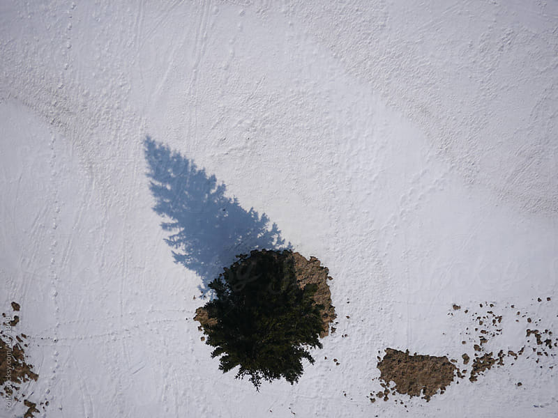 Coniferous tree casting shadow on snow  by rolfo for Stocksy United