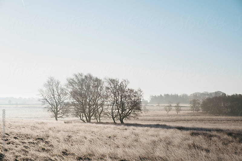 Trees in frozen moorland grass on a foggy sunrise. Beeley Moor, Derbyshire, UK. by Liam Grant for Stocksy United