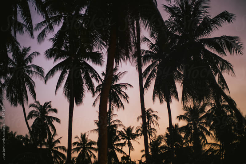 Blurry palm trees during sunset by Jovo Jovanovic for Stocksy United