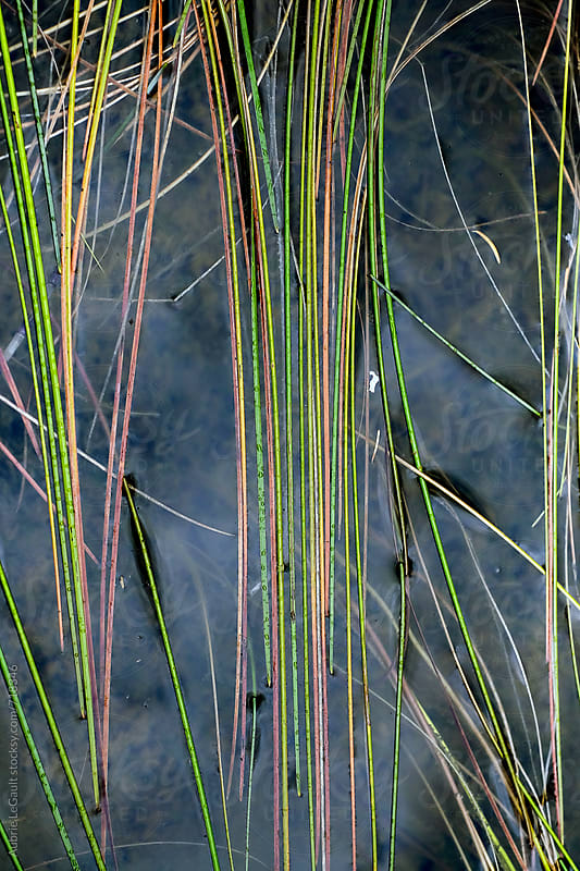 Colorful Lake Reeds  by Aubrie LeGault for Stocksy United