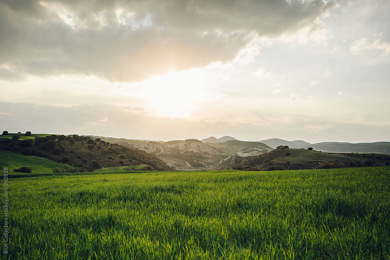 Green wheat fields view by Jordi Rulló for Stocksy United