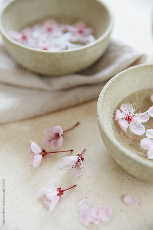 Concrete bowls with cherry blossom flowers by Trinette Reed for Stocksy United