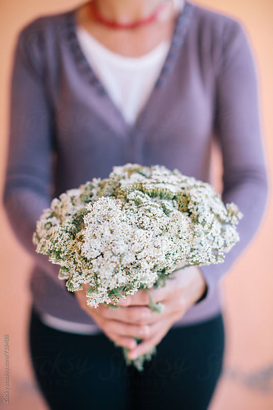 Female hands holding bouquet of the yarrow by Zocky for Stocksy United
