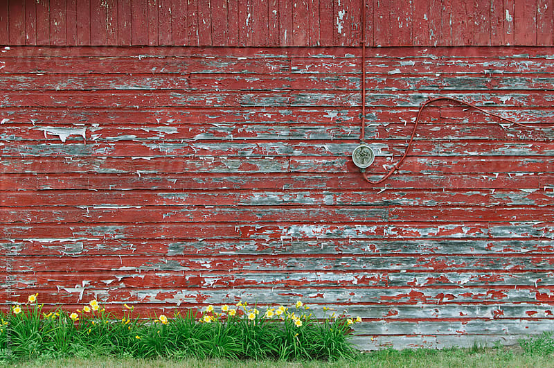 weathered red-painted wall with yellow flowers by Margaret Vincent for Stocksy United