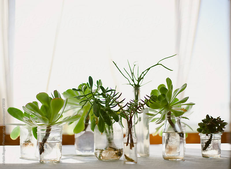 Table of Succulents by Kristin Rogers Photography for Stocksy United