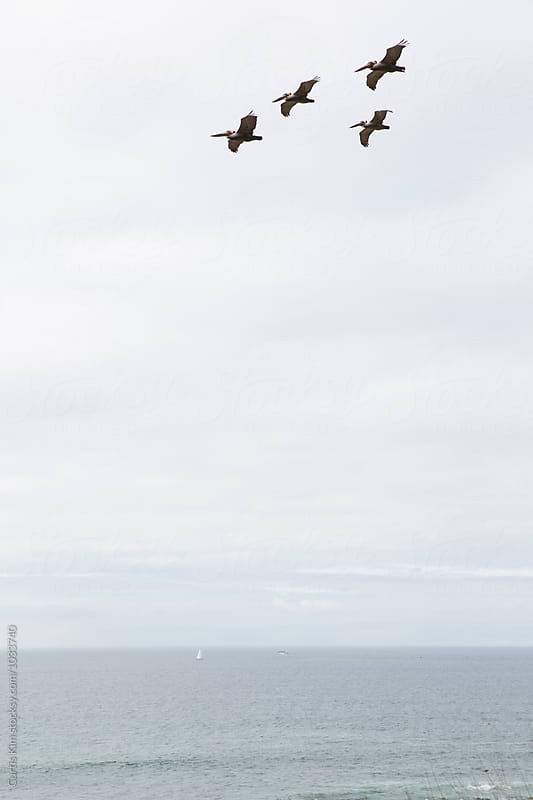 Pelicans flying over the ocean by Curtis Kim for Stocksy United